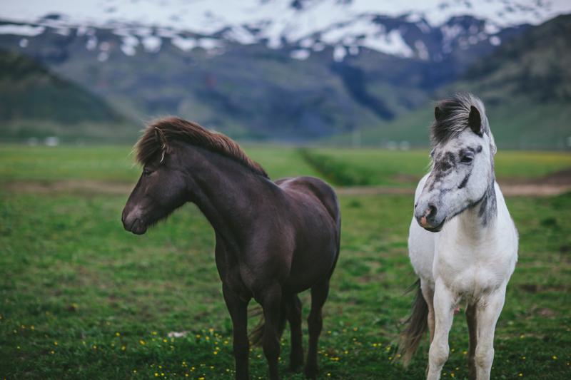 Iceland by Eva Kosmas Flores-105.jpg