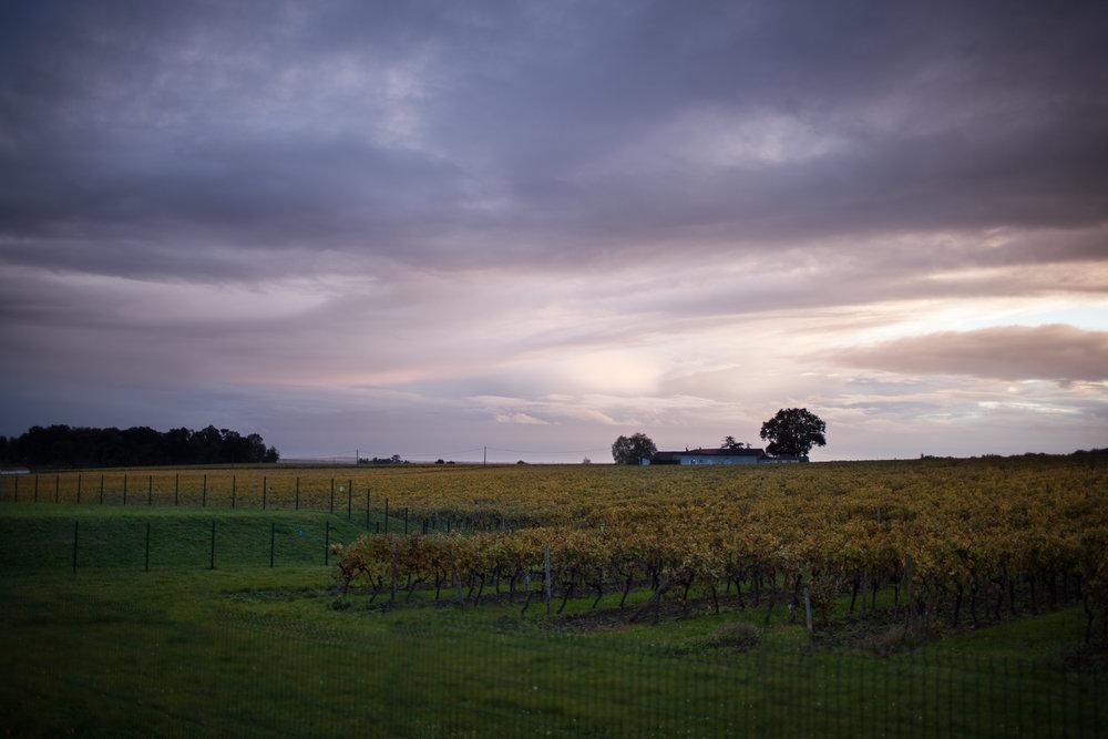 Bordeaux by Eva Kosmas Flores-2.jpg