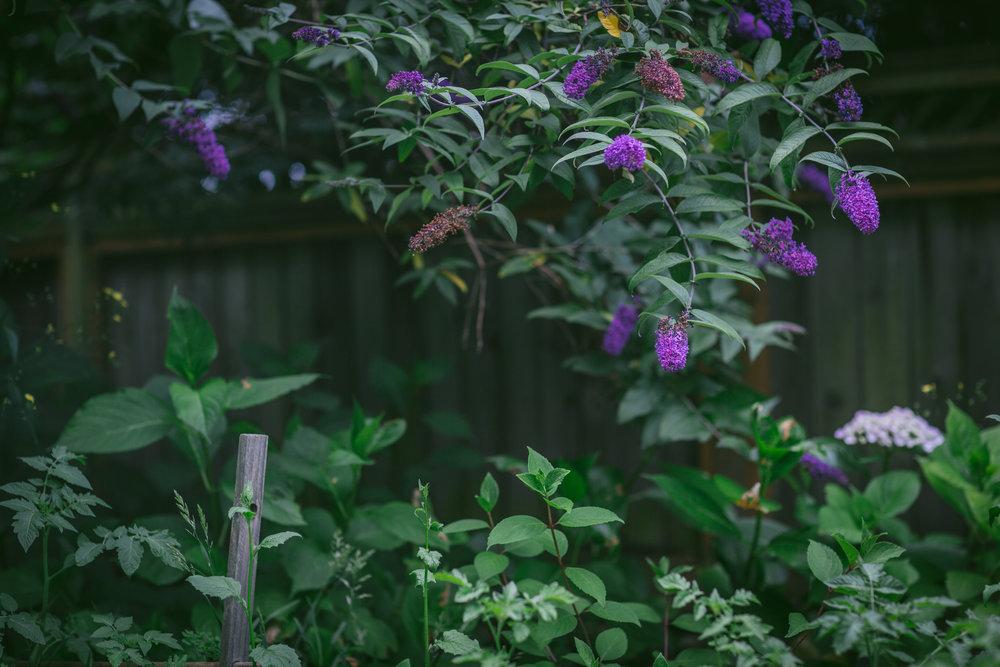Garden Landscape Bees Chickens by Eva Kosmas Flores-7.jpg