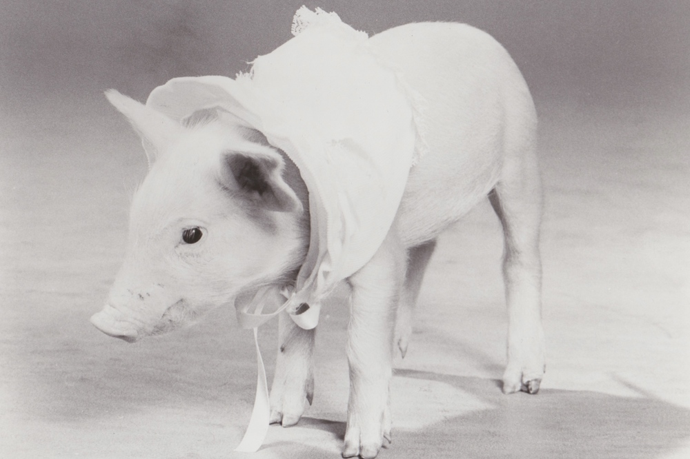 Alice Pig.jpeg