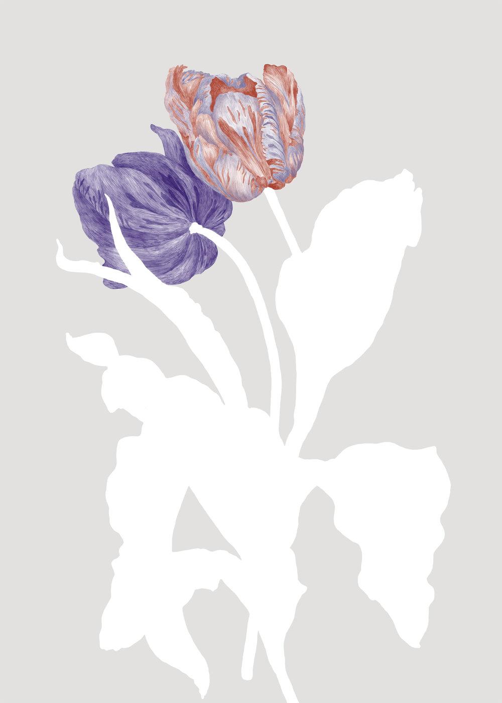 tulip_hemsida.jpg