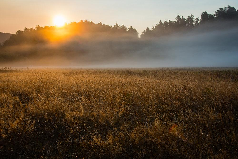 2016 09 05 Prairie Redwoods-6.jpg