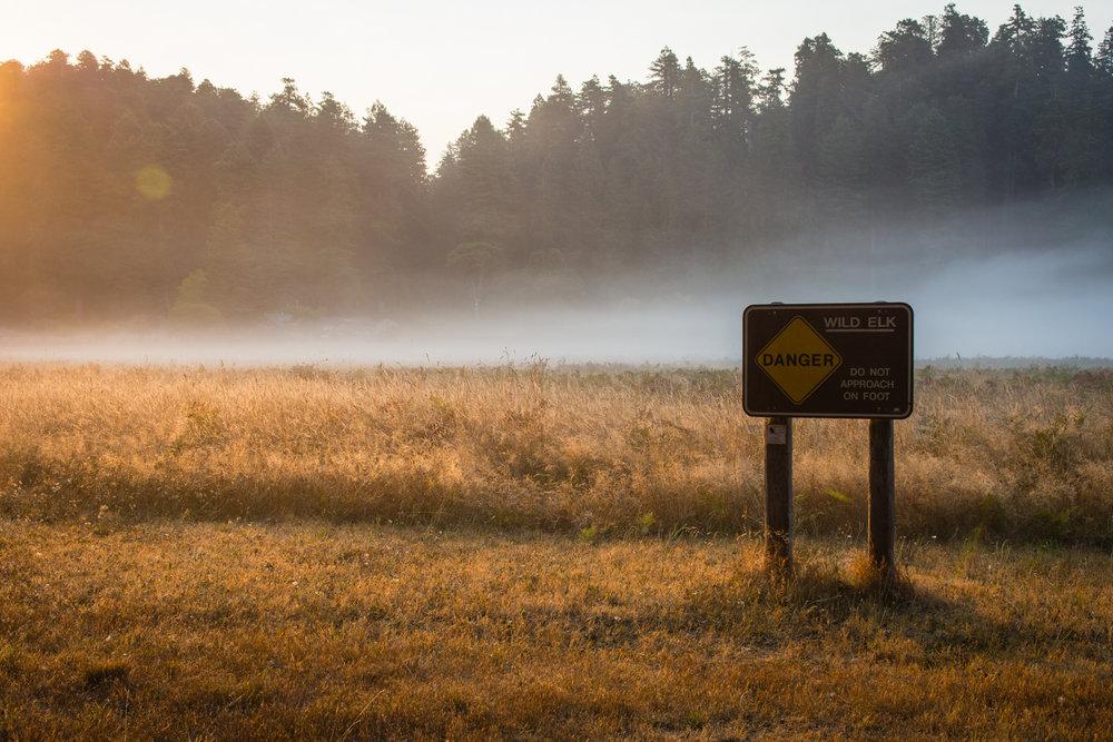 2016 09 05 Prairie Redwoods-1.jpg