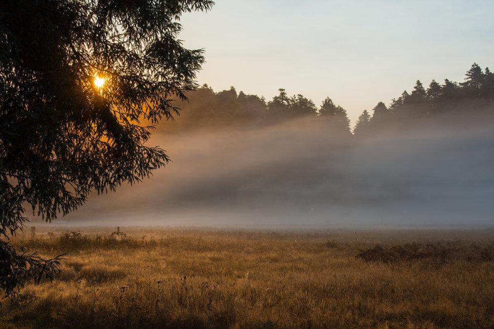 2016 09 05 Prairie Redwoods-8.jpg