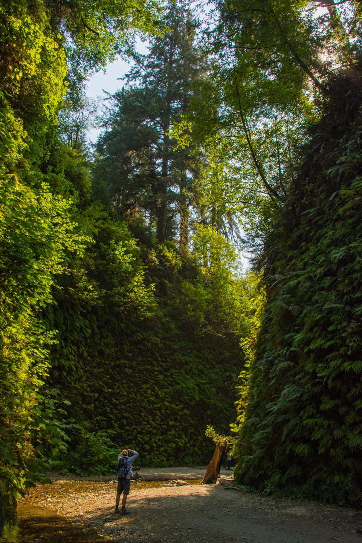2016 09 05 Prairie Redwoods-104.jpg