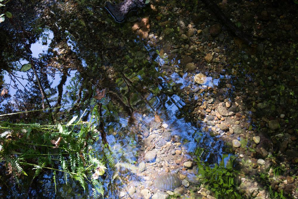 2016 09 05 Prairie Redwoods-153.jpg