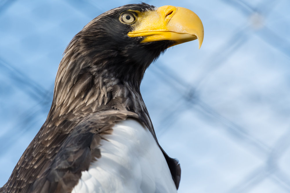 2017 10 20 Assiniboine Zoo-19.jpg
