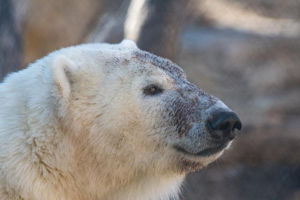 2017 10 20 Assiniboine Zoo-110.jpg