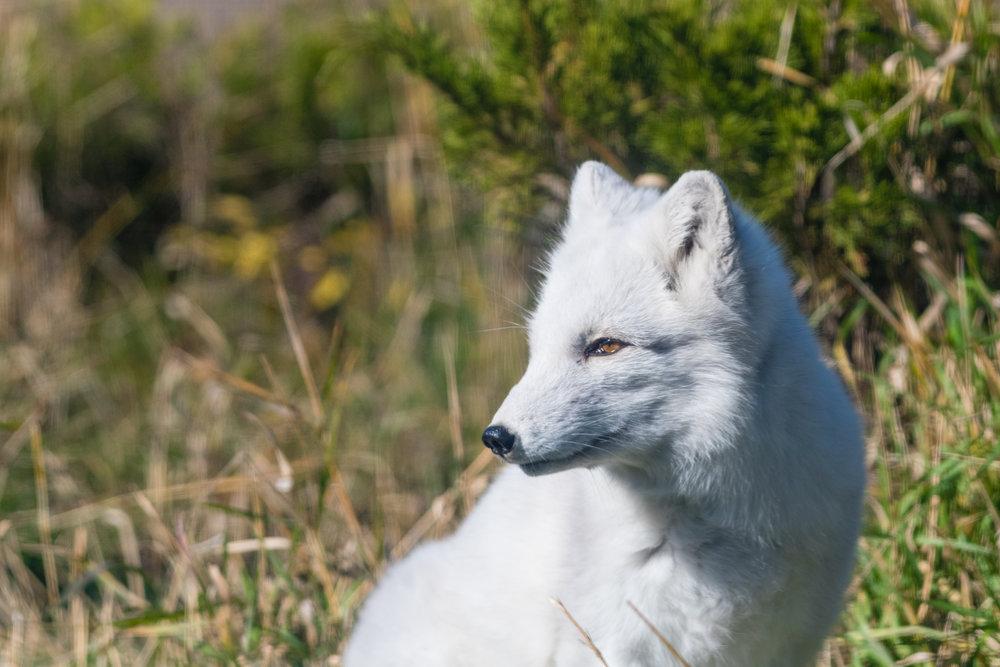 2017 10 20 Assiniboine Zoo-159.jpg