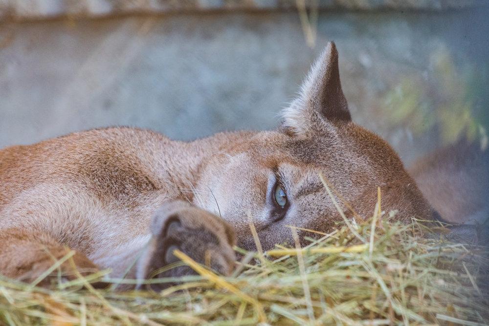 2017 10 20 Assiniboine Zoo-196.jpg