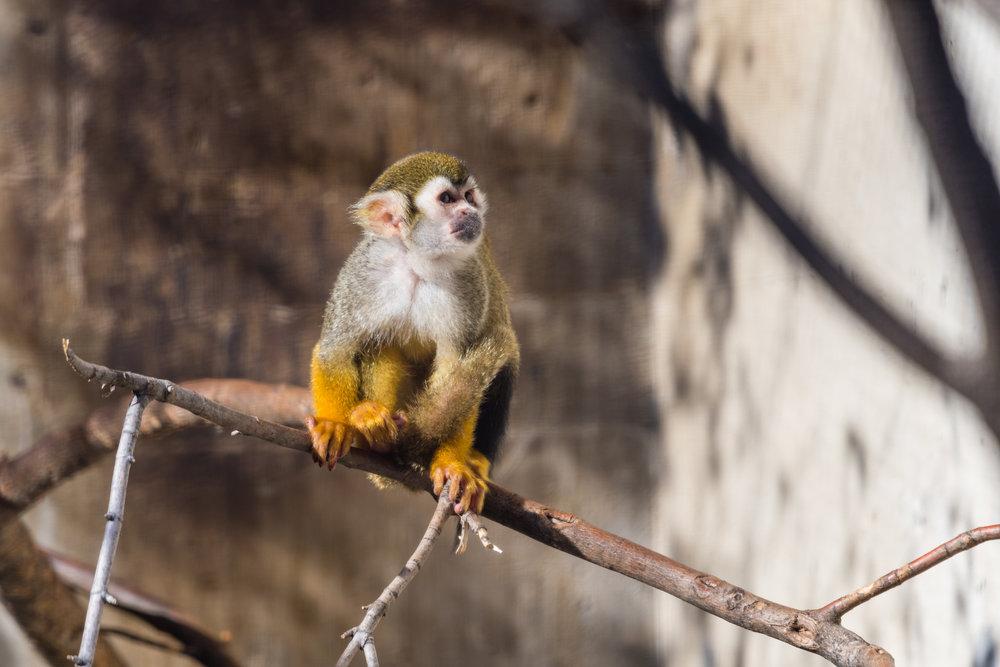 2017 10 20 Assiniboine Zoo-241.jpg