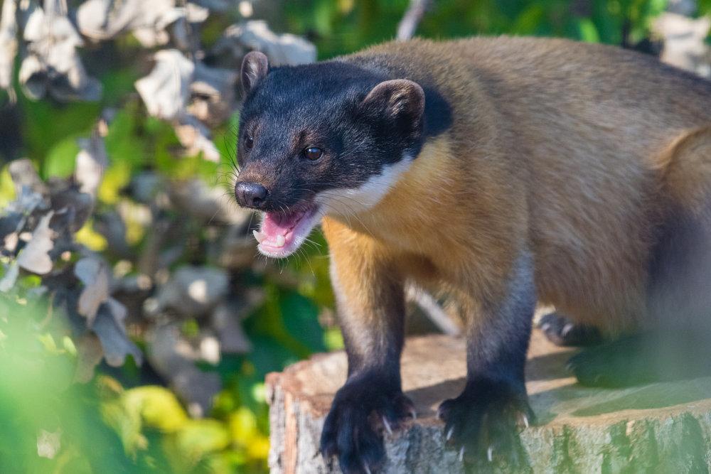2017 10 20 Assiniboine Zoo-262.jpg