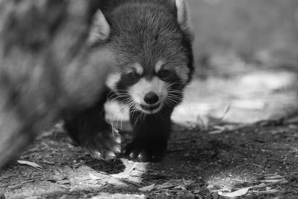 2017 10 20 Assiniboine Zoo-278-2.jpg