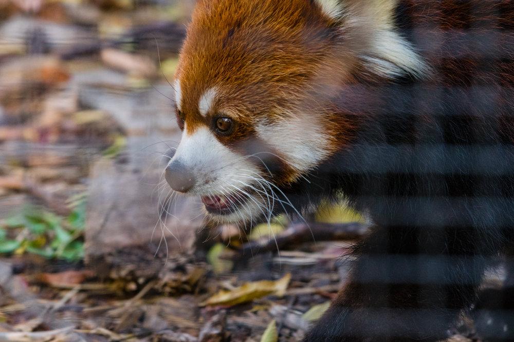 2017 10 20 Assiniboine Zoo-289.jpg