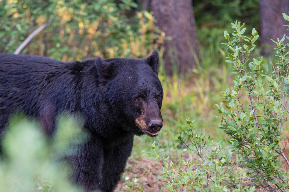 More bears.