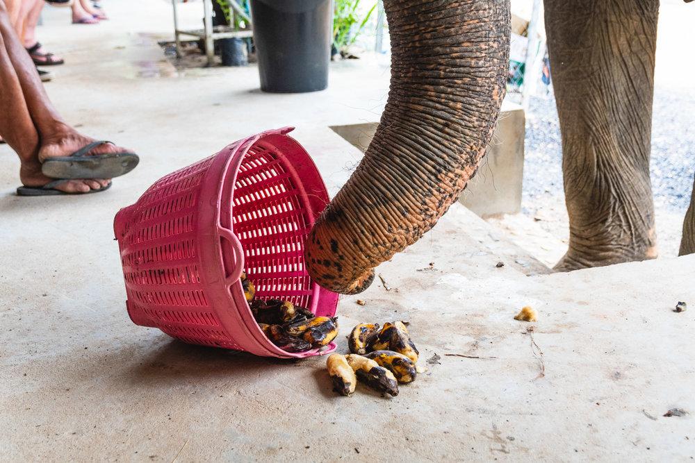2018 04 26 Elephant Retirement Park-596.jpg