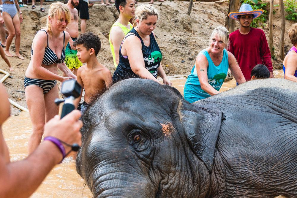 2018 04 26 Elephant Retirement Park-617.jpg