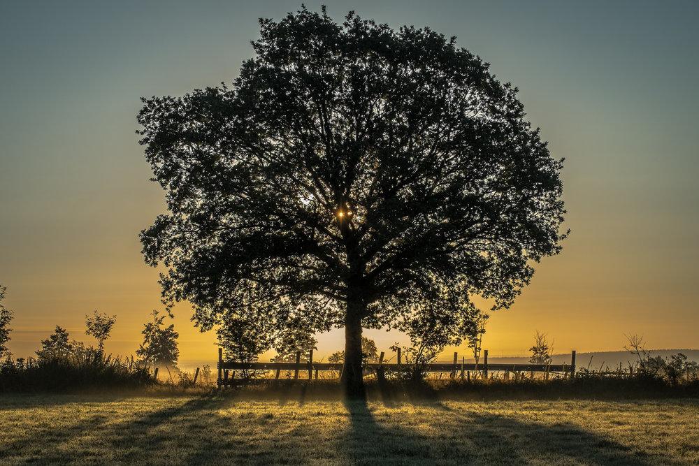 Tree in sunlight.jpg