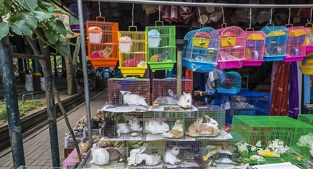 travelingwolf-bird-market-yogya-travel-guide1.jpg