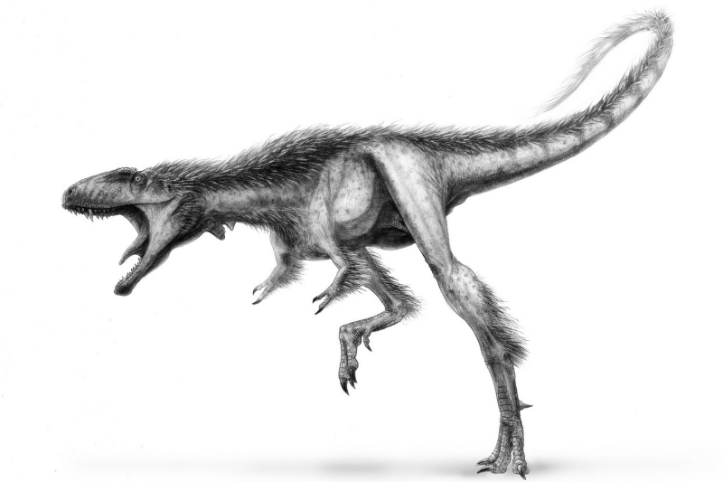 1-Raptorex-flesh-drawing1.jpg