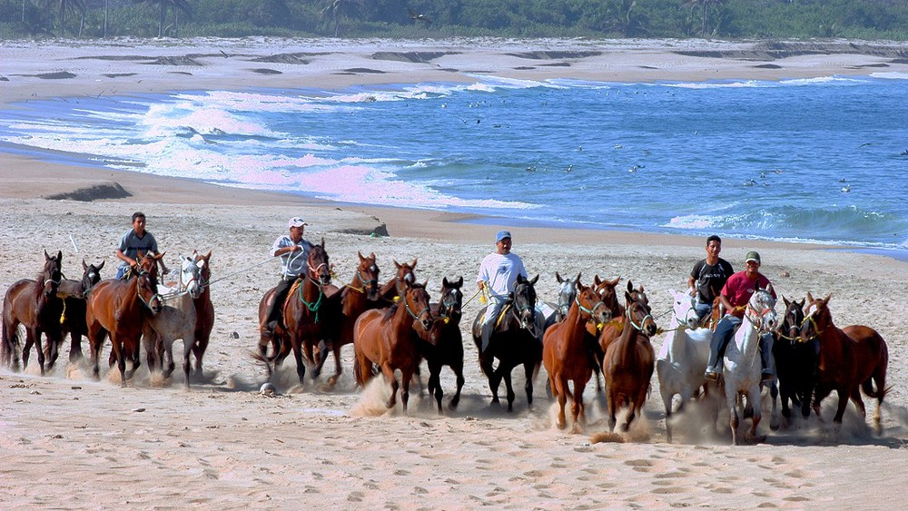 Caballos trabajando en la playa.jpg