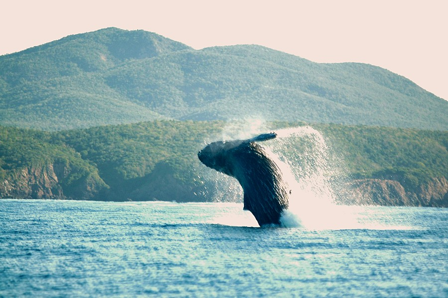 salto balena 1.JPG