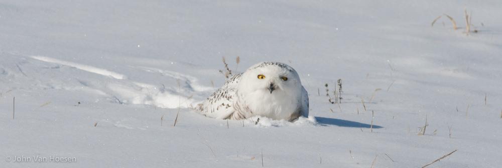 snowy4.jpg
