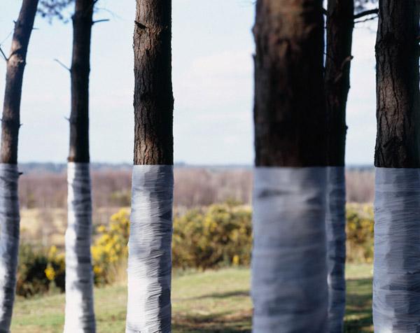 Zander Olsen_Tree, Line_008.jpg