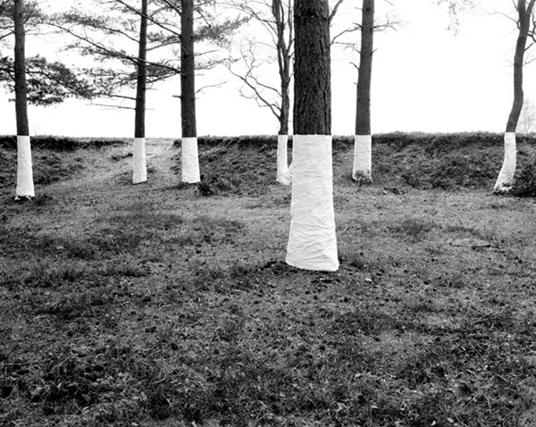 Zander Olsen_Tree, Line_009.jpg