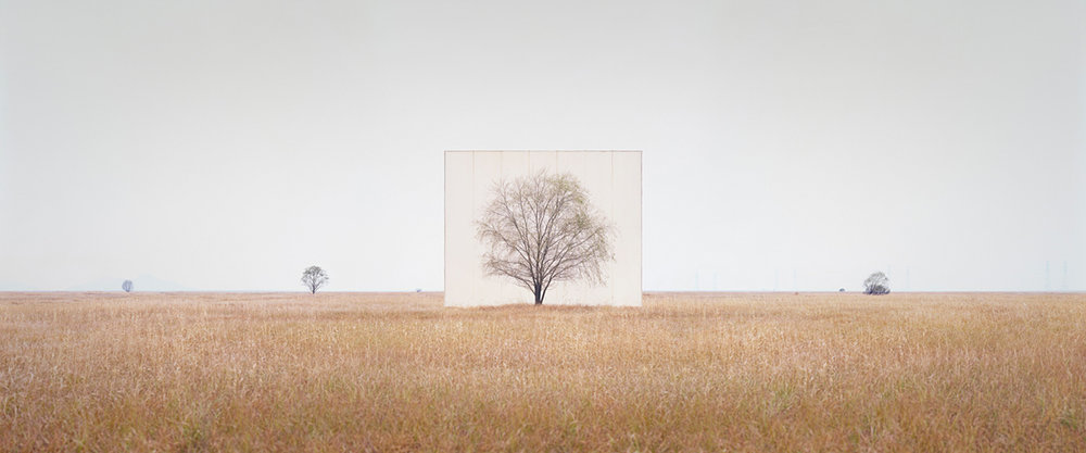 large-myoung_ho_lee-tree_3-2013.jpg