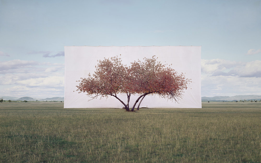 large-myoung_ho_lee-tree_2-2011.jpg