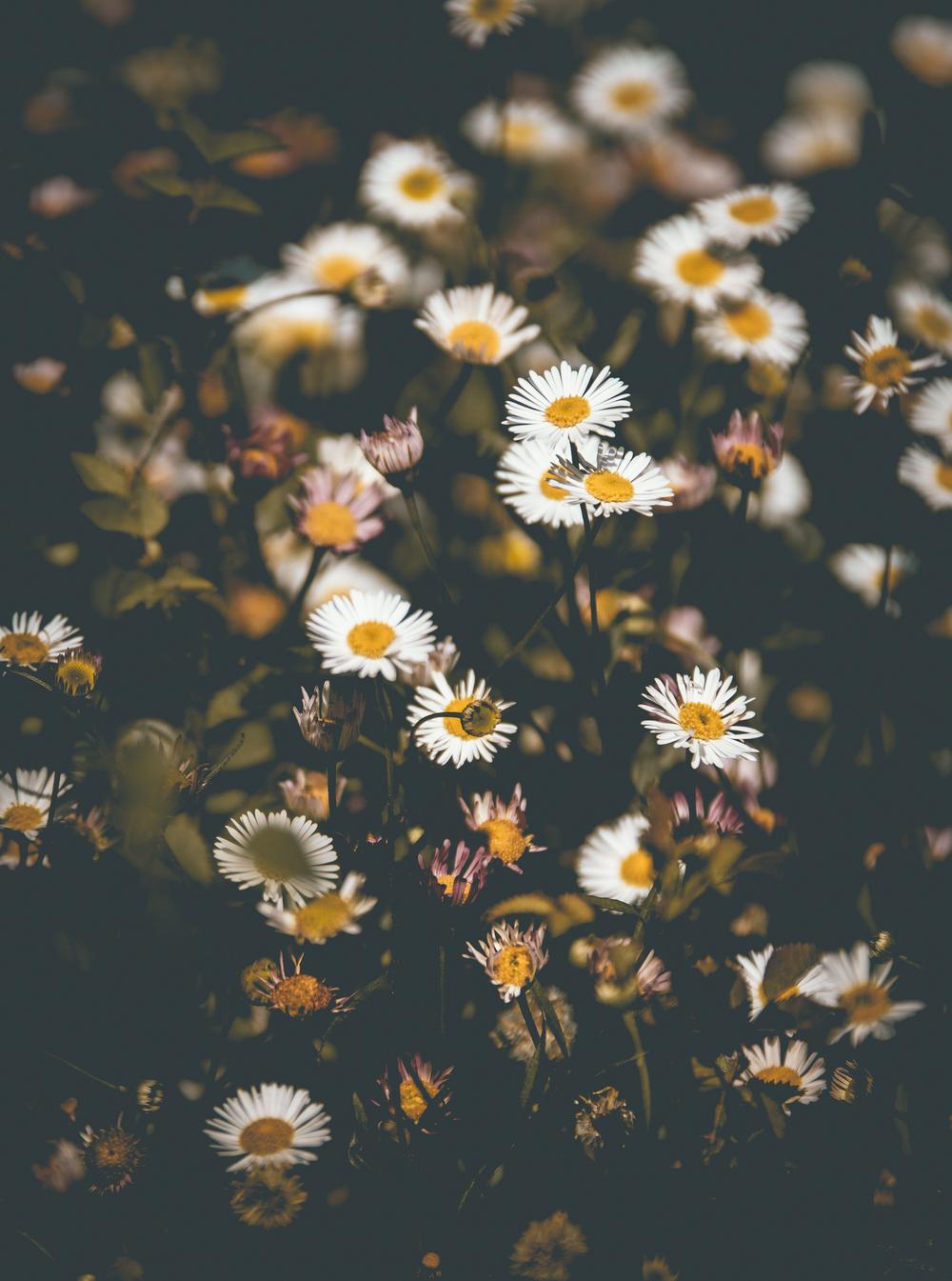 Flowers-00878.jpg