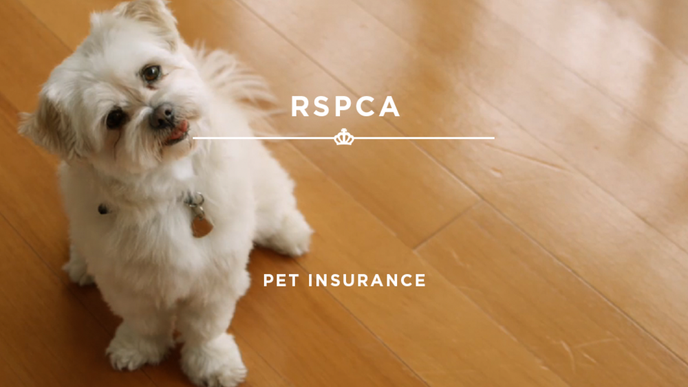 16X9_StillImage_RSPCA - Pet Insurace.png