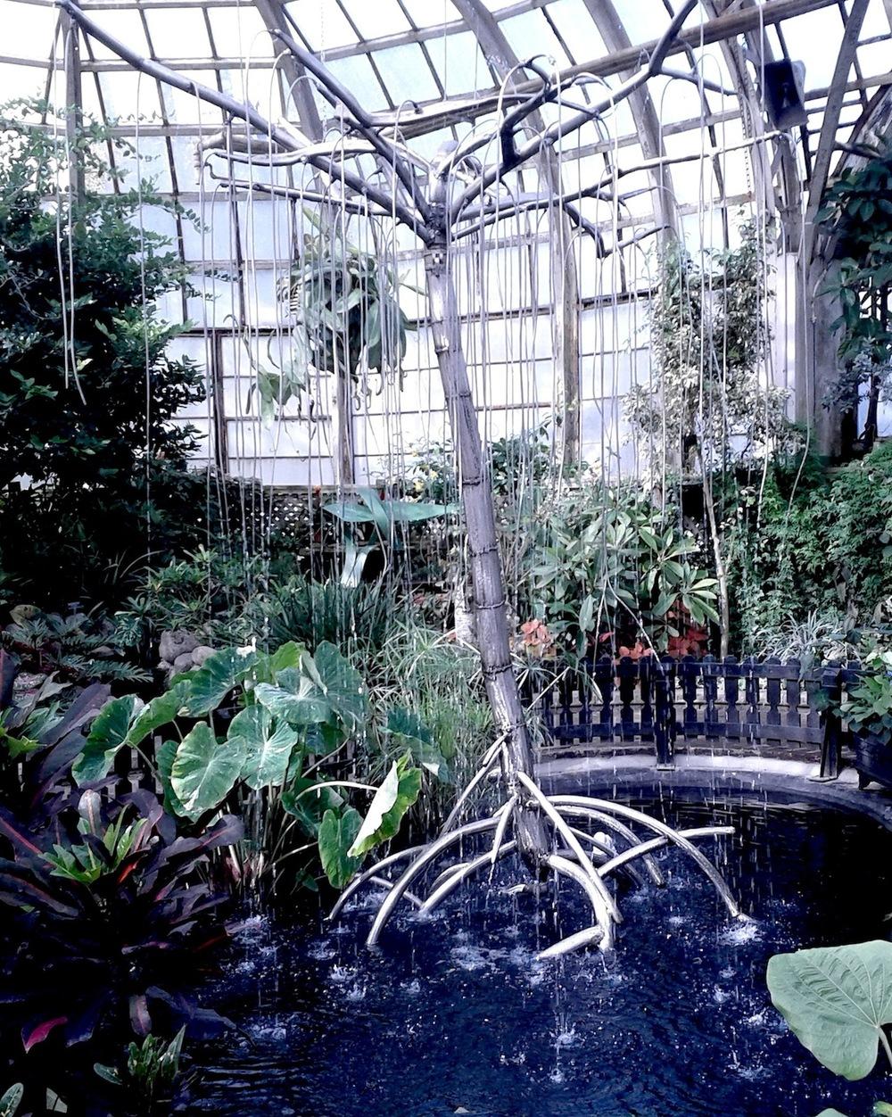 Mikes Rain Tree 02.jpg