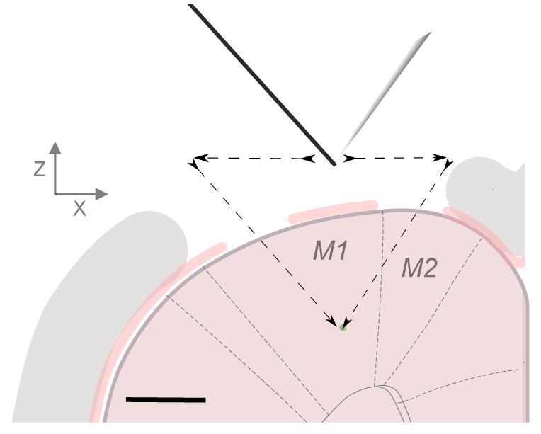 Dual-probe targeting.