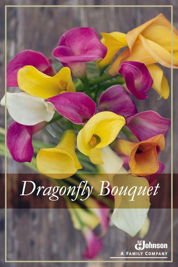 scj-dragonfly