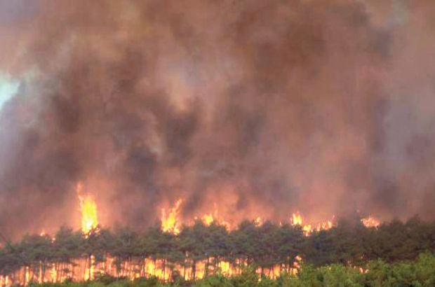 2015, Osmangazi-Mudanya Orman Yangını, Bursa