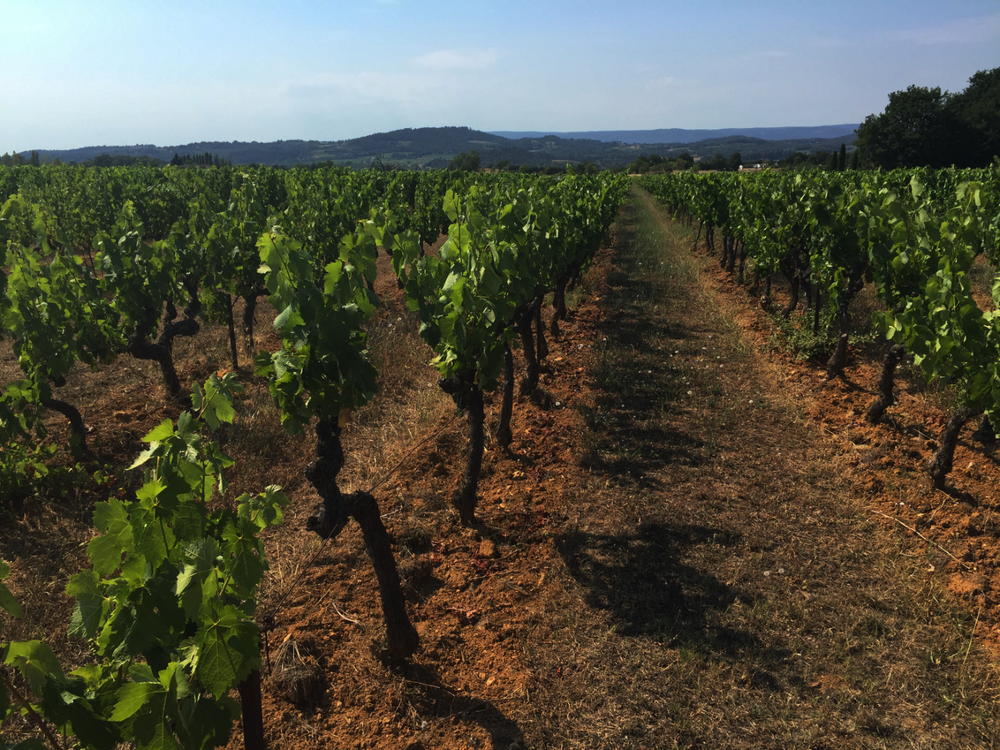 vineyard-south-of-france.png