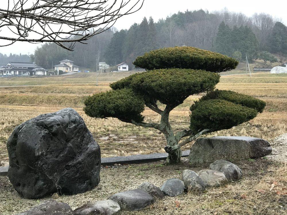 #1 - Rising Sun Cloud Tree #3 - Shobara.JPG