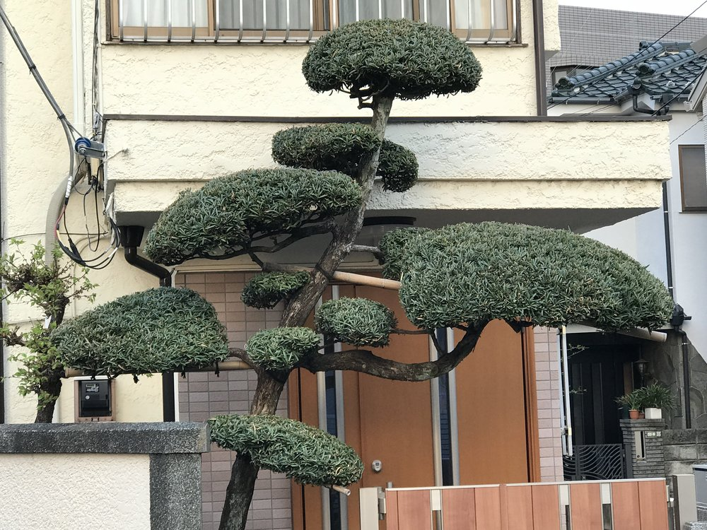 #2 - Rising Sun Cloud Tree #8.JPG