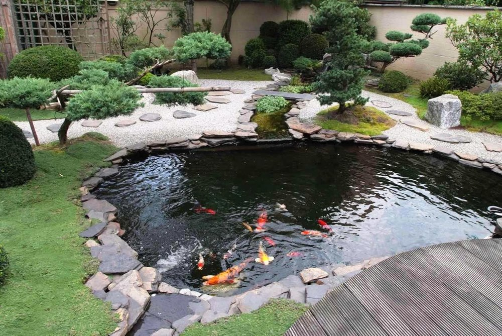 Koi pond. This one is much fancier than the one in the book.