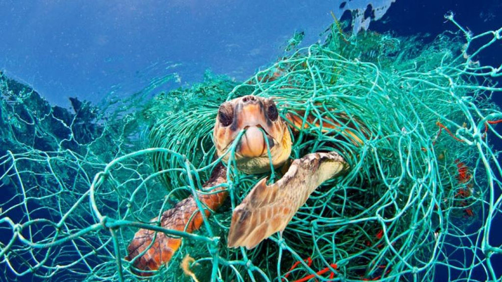 Time+passing+slowly+-+Turtle+caught+in+plastic+net.jpg