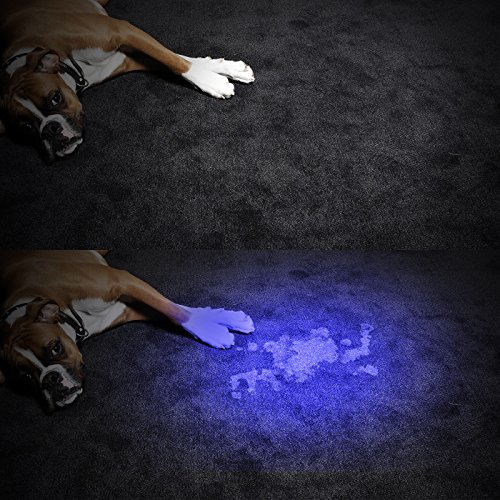 Pet Stains Odors Maid In Saint Louis Provides House Carpet - How to eliminate dog urine odor from wood floors