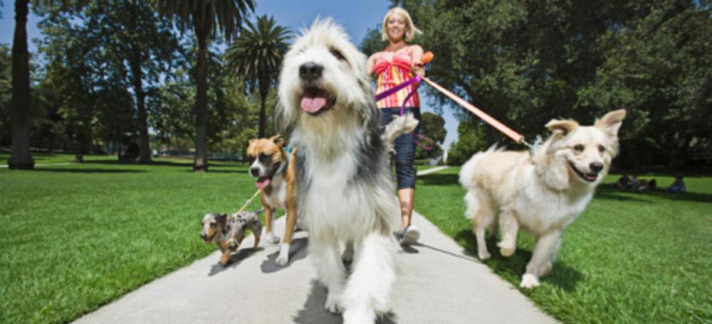 dogwalker2.jpg