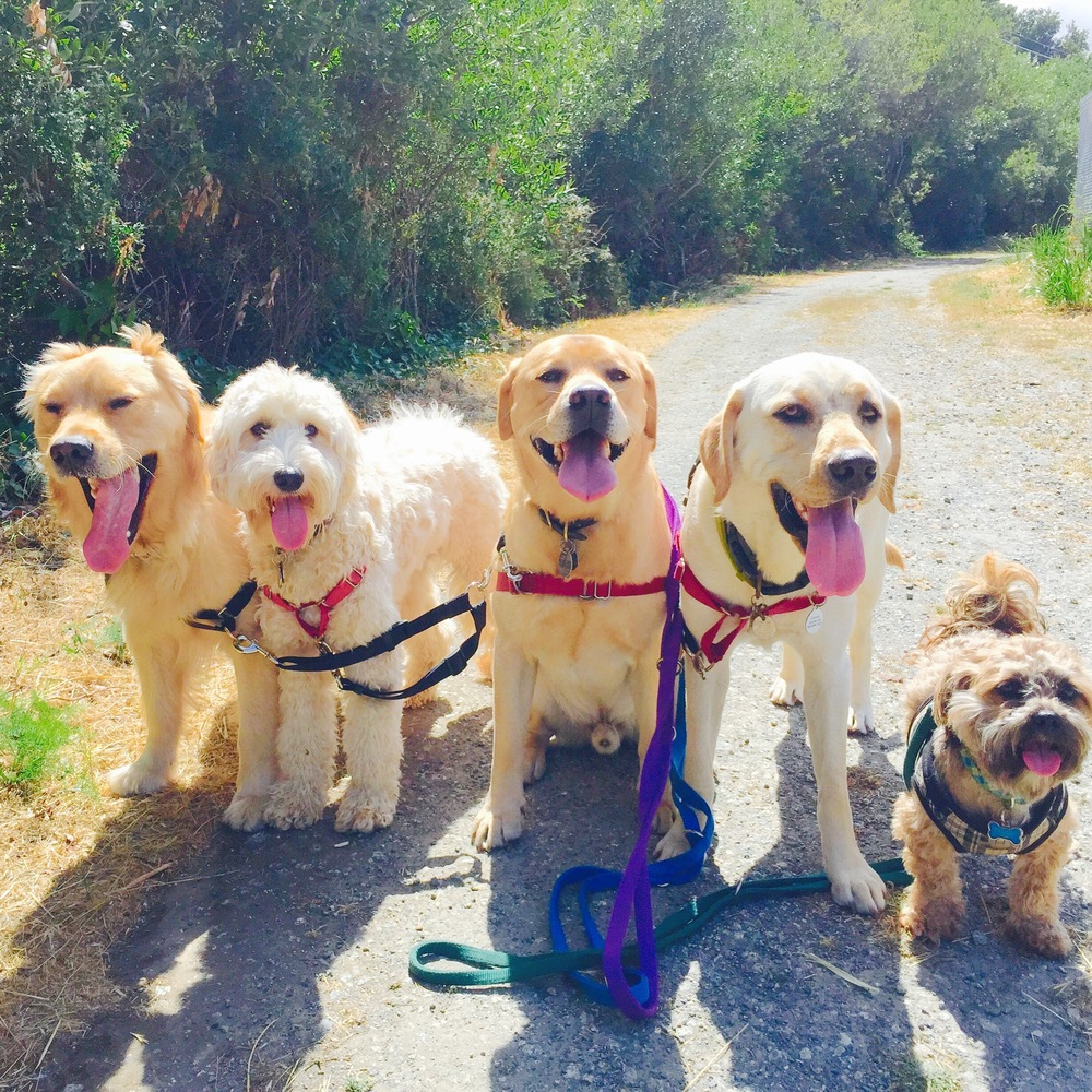 A semi-private walk or small group excursion is a chance for your dog to socialize and interact with other dog friends. We do our best to match your pup's size and temperament with similar dogs to keep the fun welcoming and safe for everyone. On a typical excursion, your pup will trek local dog-friendly hiking trails and beaches to stretch those legs and get a good exercise in.