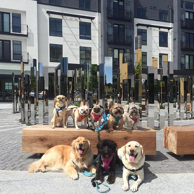 The pups approve. @baymeadowslife is where it's at!! --------------------------------------- 🐶#pointfetchmatch #instagramdogs 🐾#dogstagram #iflmdog #ilovemydog #dogwalker 🎾#adventuresindogwalking  #showcasing_pets #dogwalks #dogsareawesome #instadog #pets #sfprodog #baymeadowslife #dogsofinstagram #buzzfeedanimals #puppia #barkhappy #barkbox
