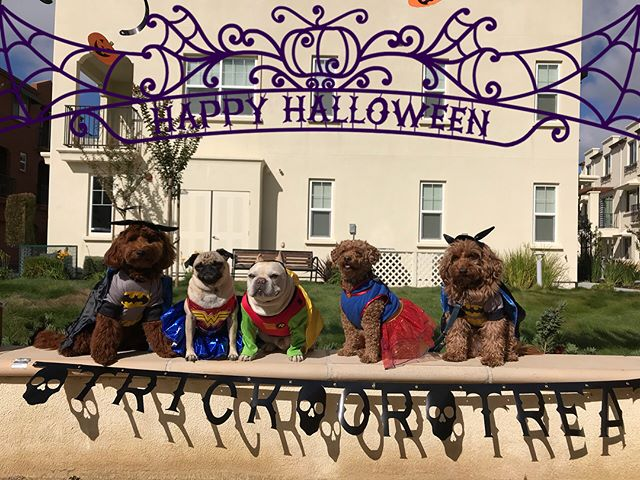 Happy Halloween 🎃  From the PFM Monday Crew --------------------------------------- 🐶#pointfetchmatch #instagramdogs 🐾#dogstagram #iflmdog #ilovemydog #dogwalker 🎾#adventuresindogwalking  #showcasing_pets #dogwalks #dogsareawesome #instadog #pets #sfprodog #baymeadowslife #dogsofinstagram #buzzfeedanimals #puppia #barkhappy #barkbox