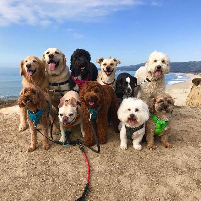 Sometimes, Life's a Beach!🏖 --------------------------------------- 🐶#pointfetchmatch #instagramdogs 🐾#dogstagram #iflmdog #ilovemydog #dogwalker 🎾#adventuresindogwalking  #showcasing_pets #dogwalks #dogsareawesome #instadog #pets #sfprodog #baymeadowslife #dogsofinstagram #buzzfeedanimals #puppia #barkhappy #barkbox
