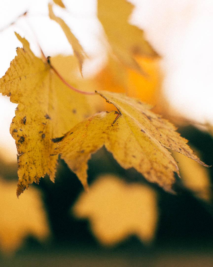 1411_Autumn_094-01.jpg