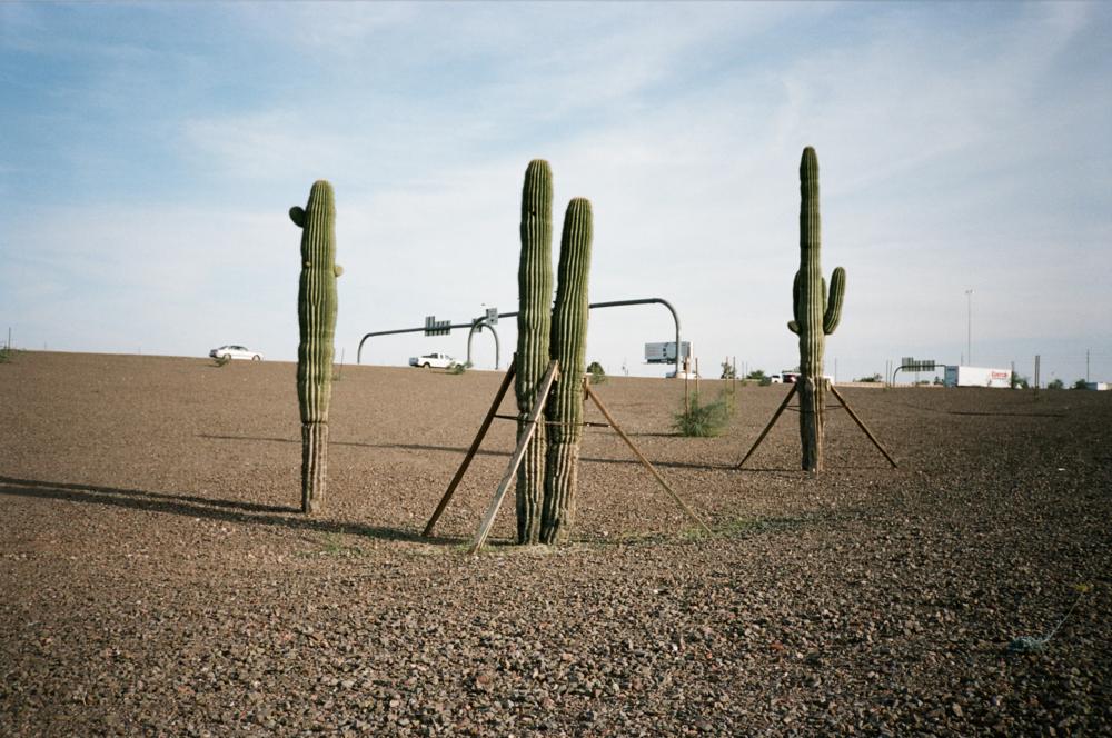 trey-burns_wesselcastle-cactus